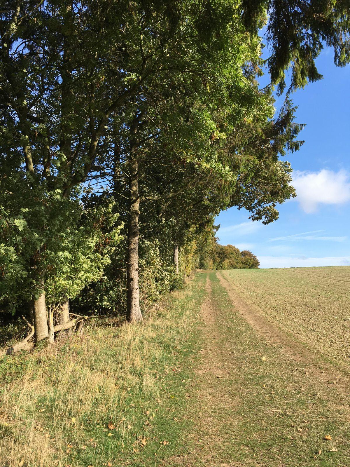 Chisbury Wood Oct 2018
